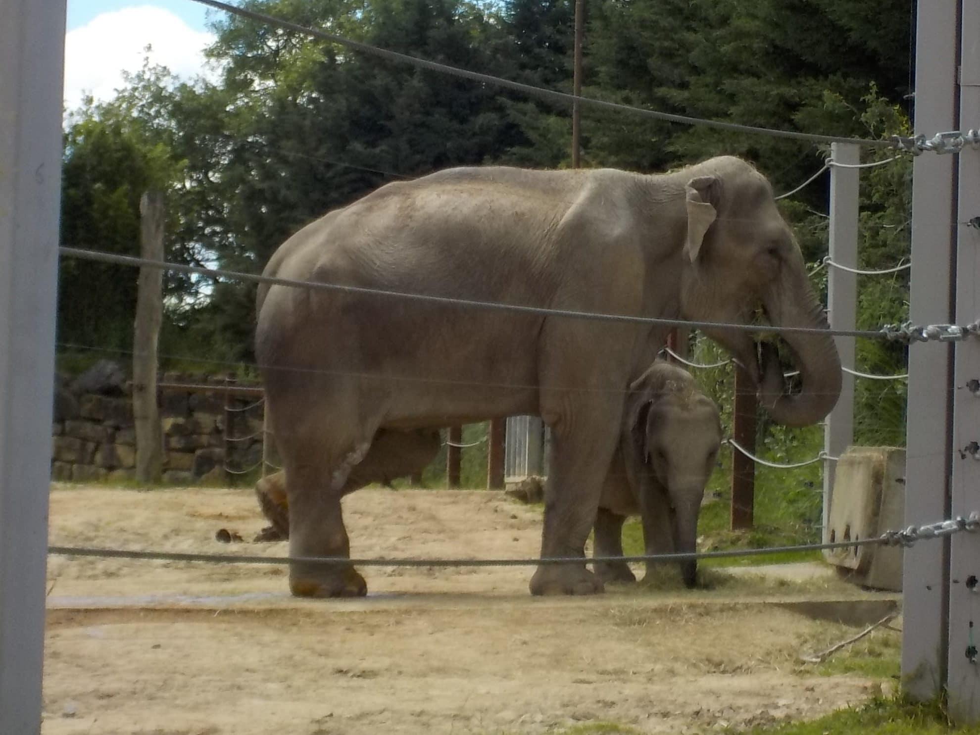 elephant-le-pal